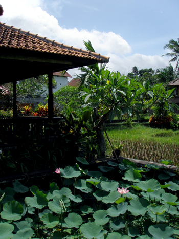 Balihotel12