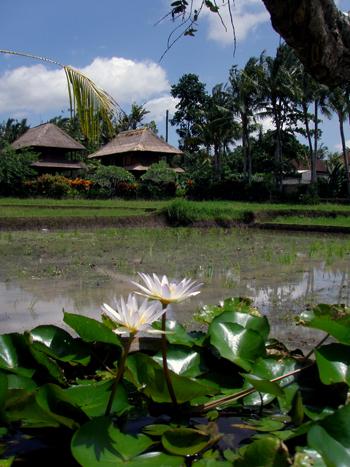 Balihotel13